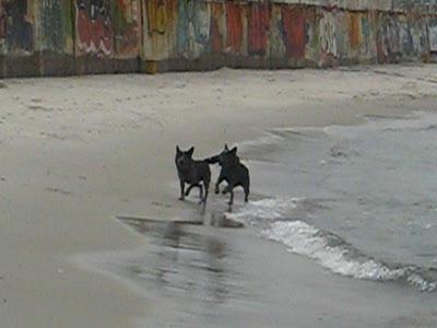 Собаки на пляже: Каша и Ити