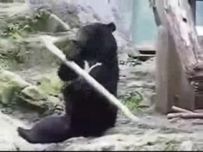 Кунгфу-медведь