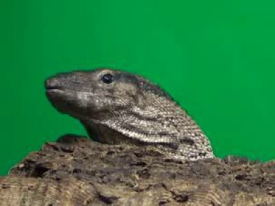 Ленинградский зоопарк. Рептилии (2014)