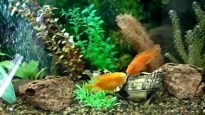 Рыбная любовь!!!!)))