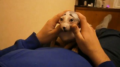 Жизнь ПЕЧАЛЬКА!!! Cat funny talk about his sad life)