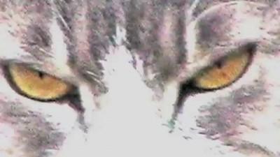 Cats VS Dogs: A New Bullying Epidemic? | HuffPost Mashup
