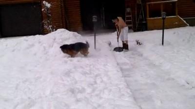 Снегоуборка: Барсик развлекается