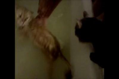 Кот - спасатель малибу