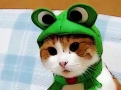 Кошки в смешных шляпах