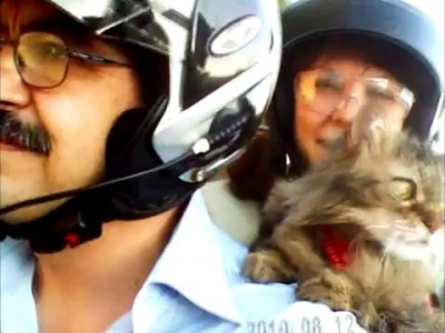 Trilly cat goes for a motorbike ride