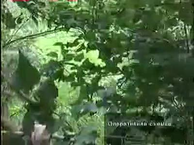 Конопляный фермер