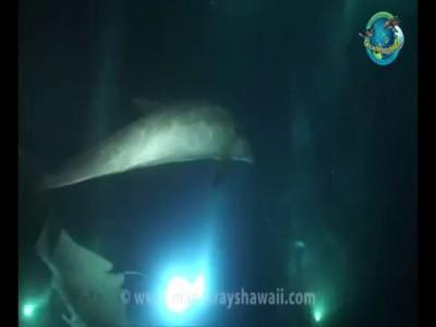 Дельфин обратился за помощью