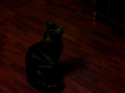 Кот смотрит AnimalPlanet