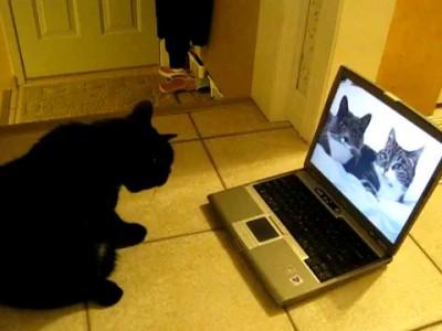 Реакция на говорящих котов 2