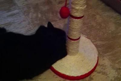 КотЭ и когтедралка
