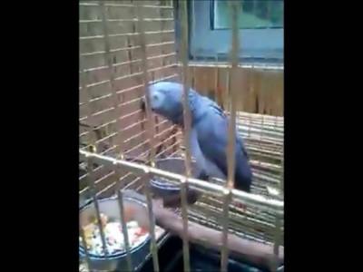 Неожиданно рассмешил попугай на экскурсии!!!