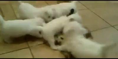 собаки напали на кота