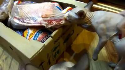 Котейка ест мясо.