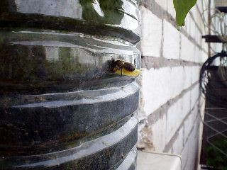 Пчелка строит домик