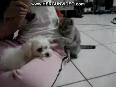 Кот хочет воевать