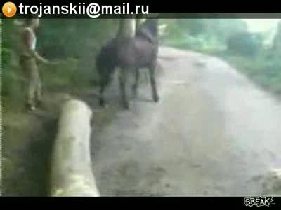 Нокаут от Коня