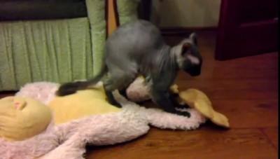 Котёнок любит обезьянку