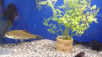 Прожорливая рыба
