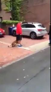 Собакоумный пес