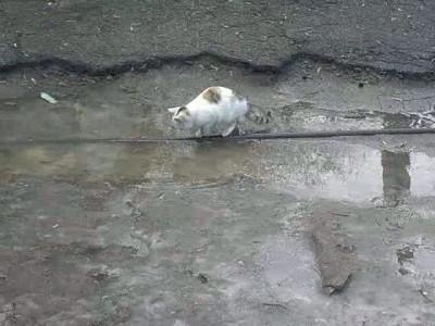 Кот - морж