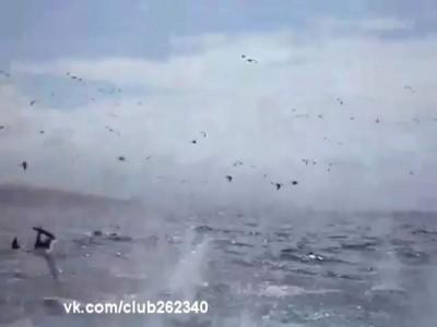 Массовая птичья охота