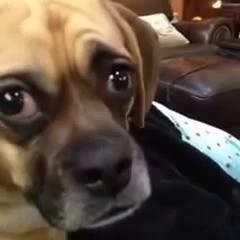 Не хотелось тебе этого говорить, но ты собака Did not want to tell you, but you're a dog
