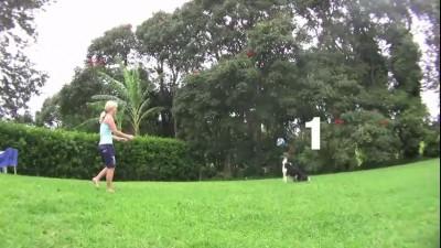 Собака играет в волейбол
