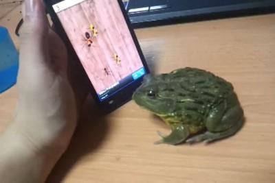 Троллинг жабы