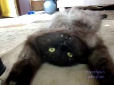 Кот в отключке