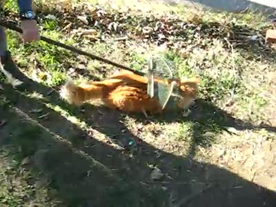 Кот - Мазохист