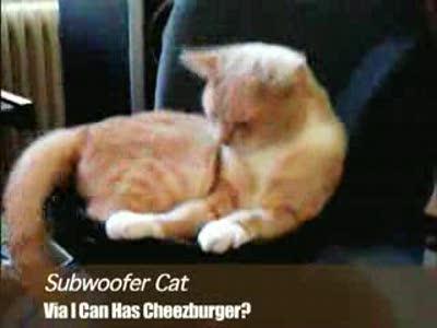 Кот на сабвуфере