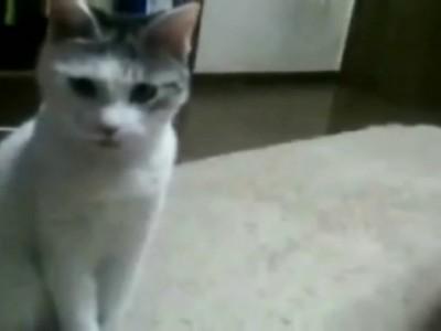 От чего кот в шоке?