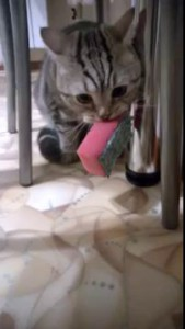 Когда кот против того что бы ты мыл посуду )