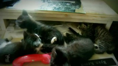 4 Cute Kittens Sleeping in a Drawer