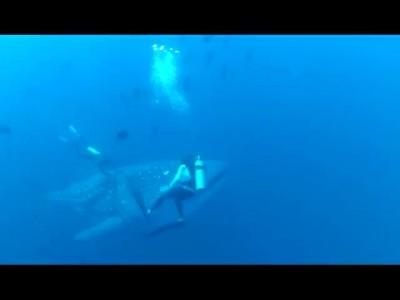 Дайверы помогли китовой акуле
