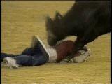Бык снимает штаны с матадора