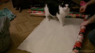 Кот в подарок на Новый Год.