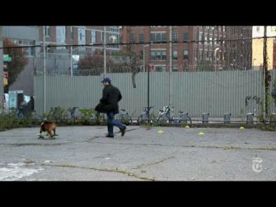 Собака-скейтбордяка