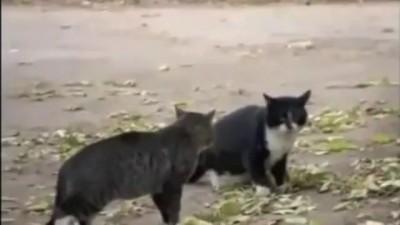 Кошачьи бои без правил и собака-судья))