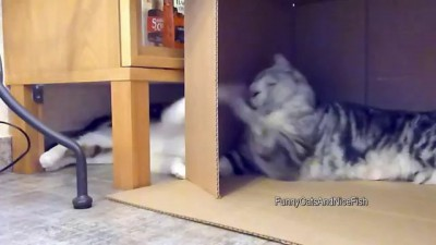 It's my box ! Funny cats
