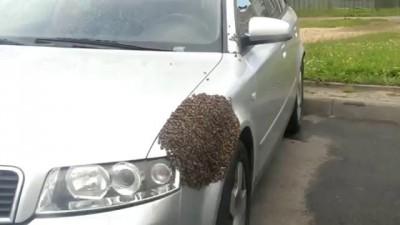Пчелы атаковали машину
