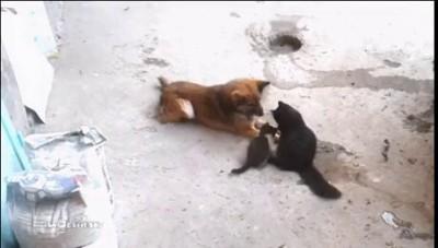 кошка и старый друг