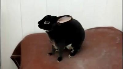 Прикольный крик кролика!