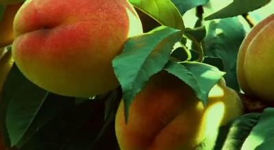 Sadochok Fruit Garden
