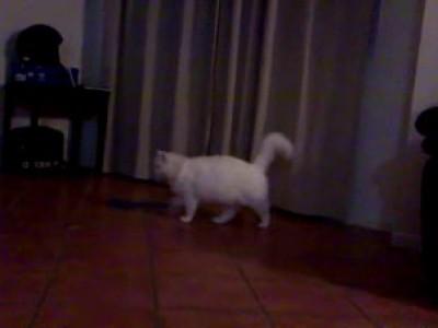 Сильный испуг кошки