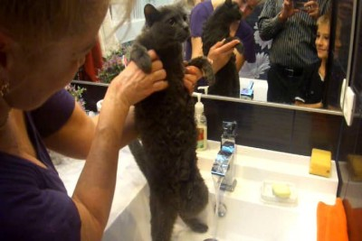 Кот и вода