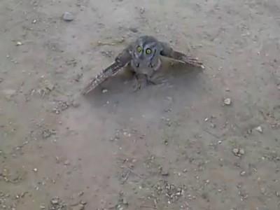 Не обижай сову