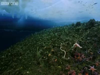 Timelapse of swarming monster worms and sea stars eating a dead seal