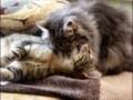 Котейки развлекаются...